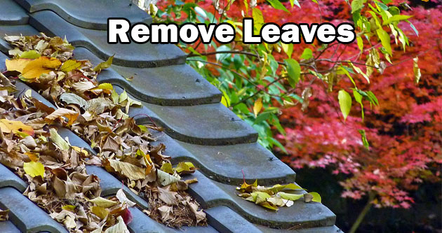 Remove Leaves