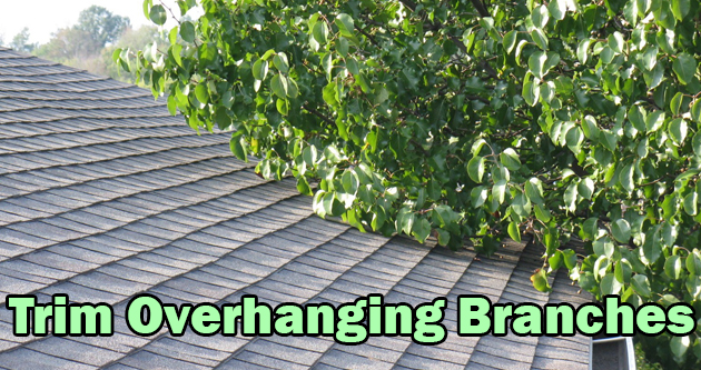 Trim Overhanging Branches