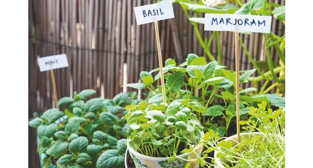 Plant Your Own Herbs